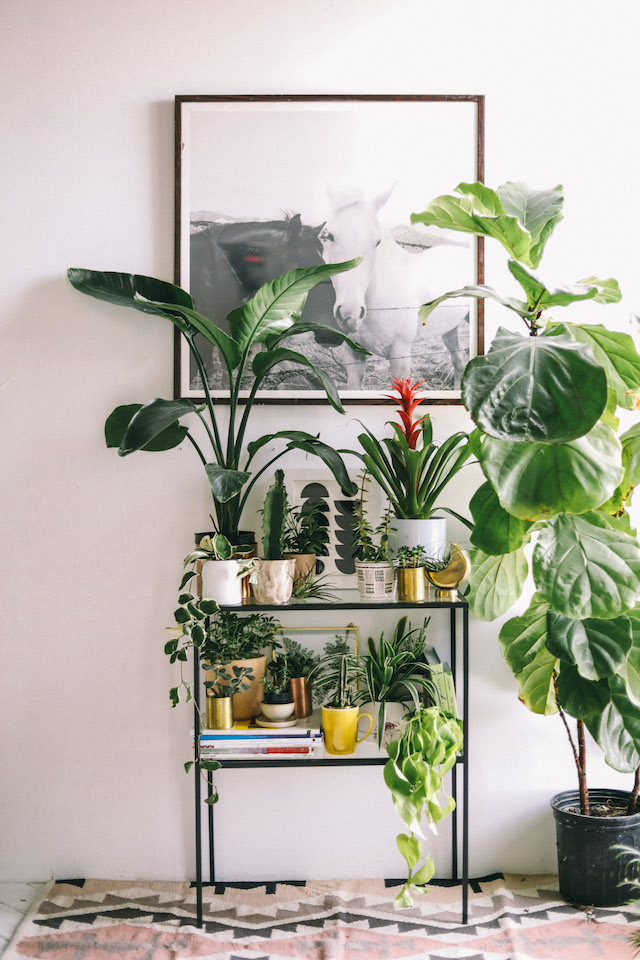 Plant Shelf Styling