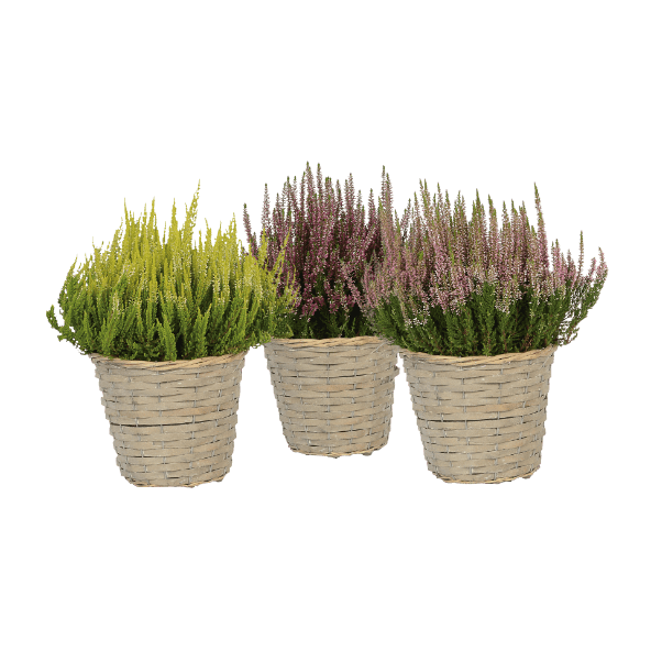 aldi folder week 36 planten heide