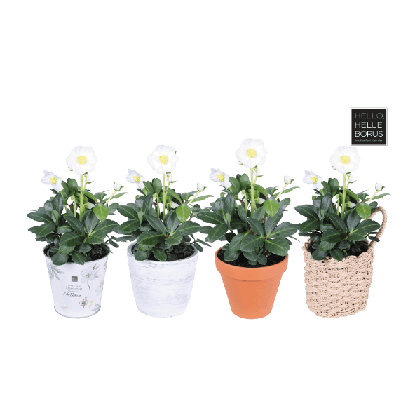 aldi folder week 47 planten