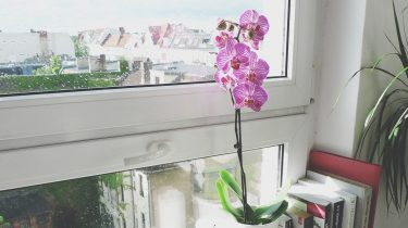 aldi folder week 6 kamerplanten orchidee