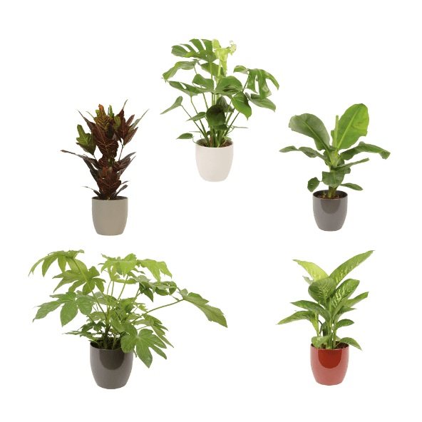 aldi folder week 7 grote kamerplanten