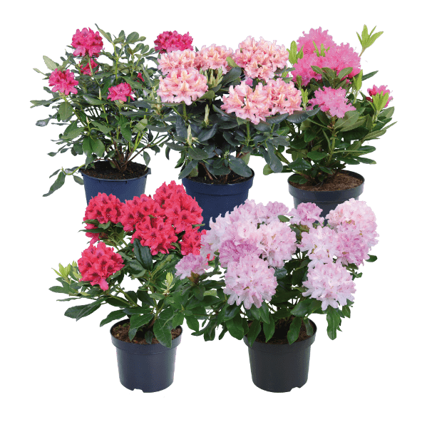 aldi folder week 15 planten