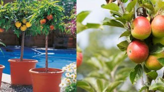 aldi folder week 16 planten tuin fruitboom