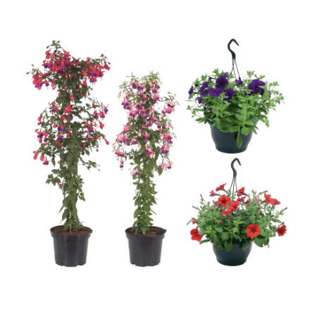 aldi folder week 18 planten