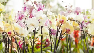 aldi folder week 19 planten orchidee moederdag
