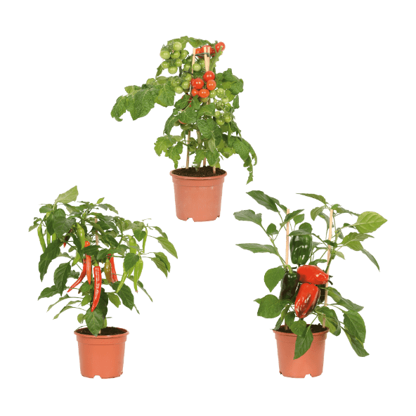 aldi folder week 20 planten