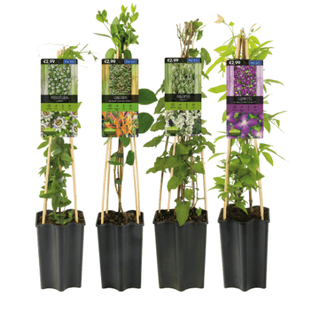 aldi folder week 21 planten