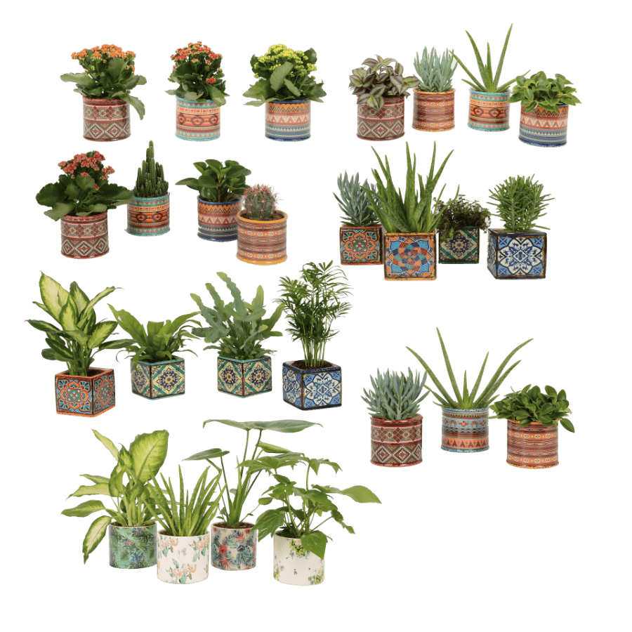 groene kamerplanten aldi folder week 28