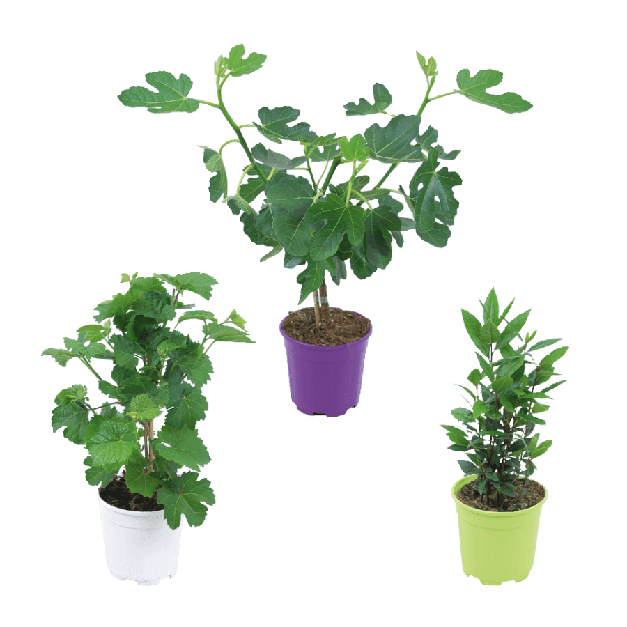 aldi folder week 32 2019 italiaanse planten