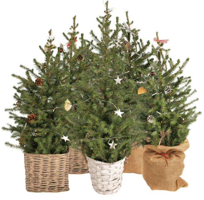 Kerstbomen kamerplanten Aldi folder week 49