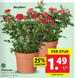 Potrozen kamerplanten Lidl folder week 48