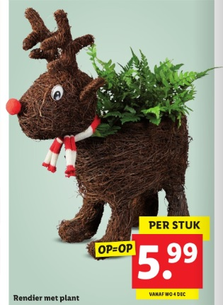 Lidl kamerplanten week 49 rendier
