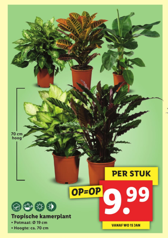 lidl folder week 3 2020 kamerplanten