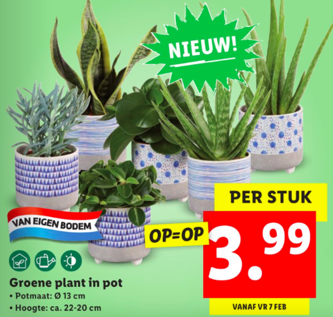 lidl folder week 6 2020 kamerplanten
