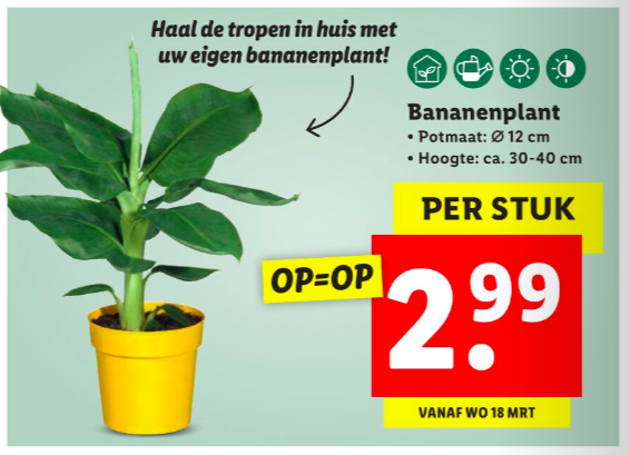 kamerplanten lidl folder week 12