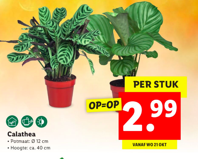 calathea lidl folder week 43 2020